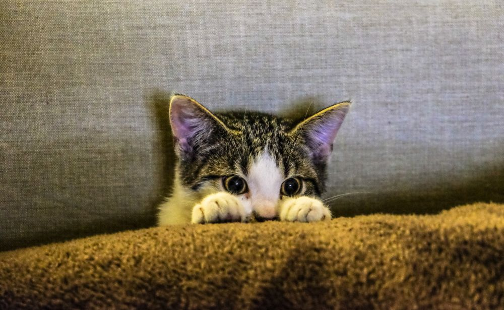 A cute kitty is hiding on the couch and peaking out.